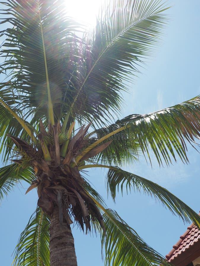 Δέντρο καρύδων μεσημβρίας στοκ φωτογραφίες με δικαίωμα ελεύθερης χρήσης