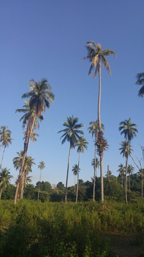 Δέντρο καρύδων με το φωτεινό μπλε ουρανό στοκ εικόνες