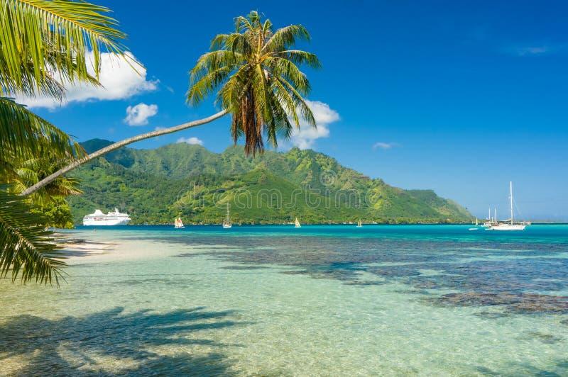 Δέντρο καρύδων σε μια παραλία σε Moorea στοκ φωτογραφία με δικαίωμα ελεύθερης χρήσης