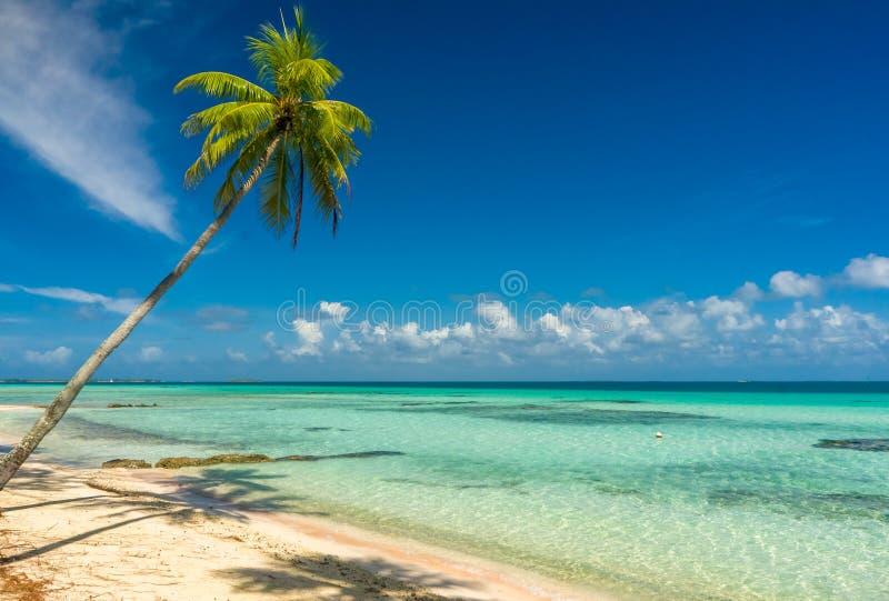 Δέντρο καρύδων σε μια παραλία σε Tikehau στοκ εικόνες με δικαίωμα ελεύθερης χρήσης