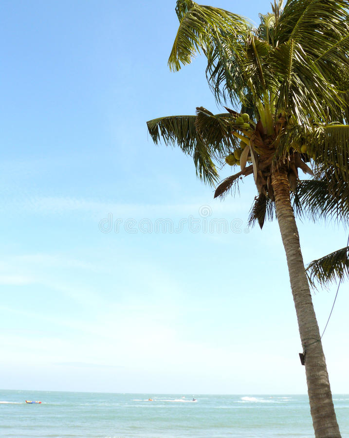 Δέντρο καρύδων plam στην παραλία στοκ εικόνες