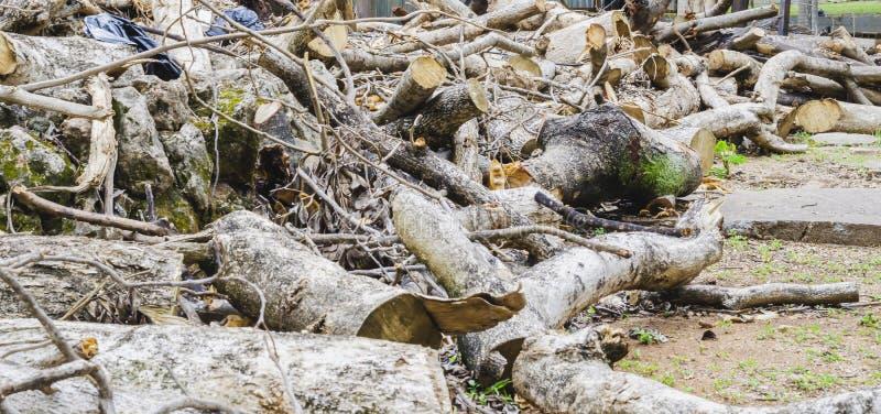 Δέντρο καταρριφθε'ν που συσσωρεύεται όπως τα κούτσουρα στοκ εικόνα με δικαίωμα ελεύθερης χρήσης