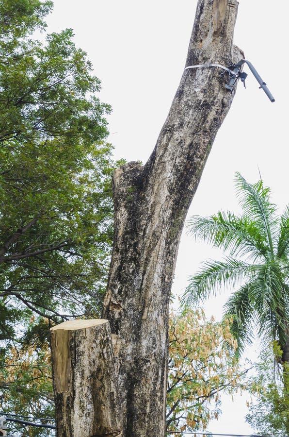 Δέντρο καταρριφθε'ν που συσσωρεύεται όπως τα κούτσουρα στοκ φωτογραφίες με δικαίωμα ελεύθερης χρήσης
