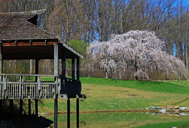 Δέντρο κερασιών σπιτιών τσαγιού στοκ εικόνα με δικαίωμα ελεύθερης χρήσης