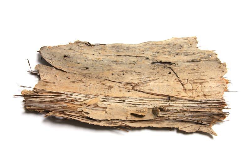 δέντρο κομματιού φλοιών στοκ φωτογραφίες με δικαίωμα ελεύθερης χρήσης