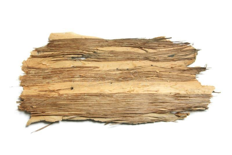 δέντρο κομματιού φλοιών στοκ εικόνες