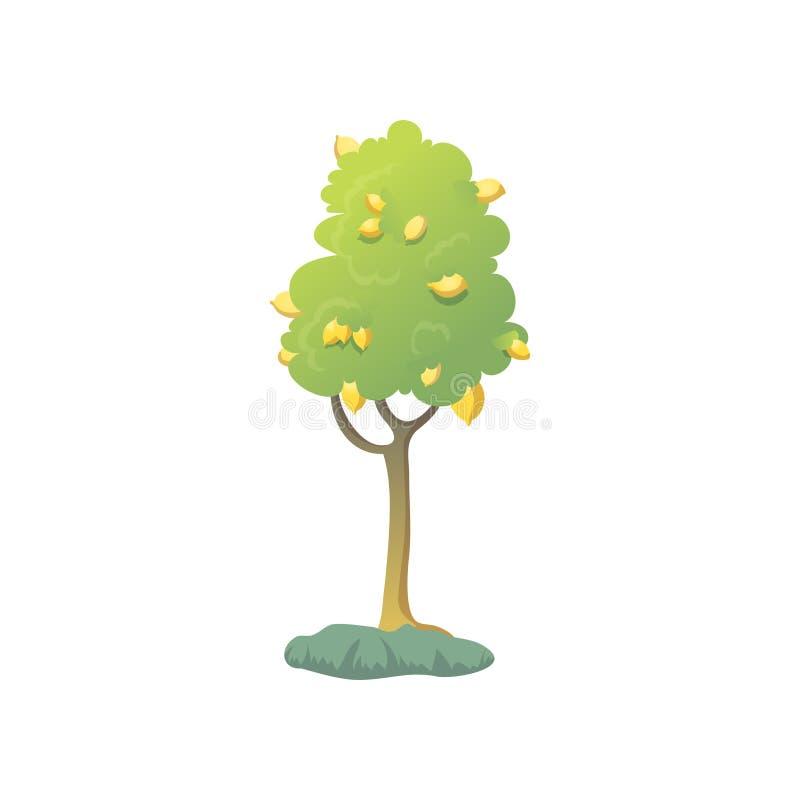 Δέντρο λεμονιών Πολλή κίτρινη ανάπτυξη limni σε ένα δέντρο απεικόνιση αποθεμάτων