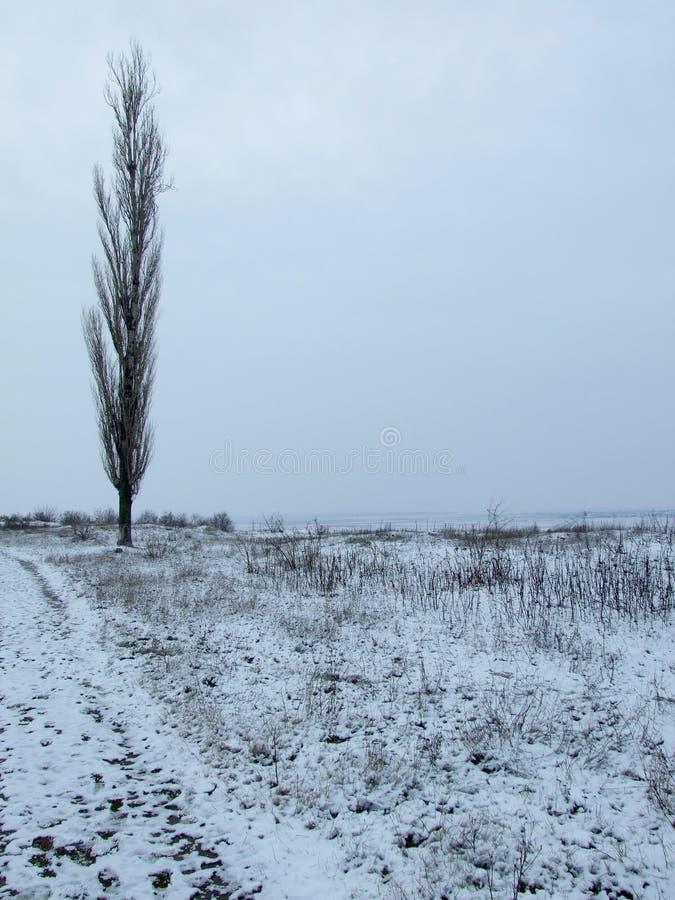 δέντρο λευκών στοκ φωτογραφία