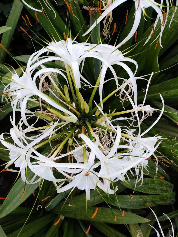 Δέντρο λουλουδιών στον κήπο μου στοκ εικόνες