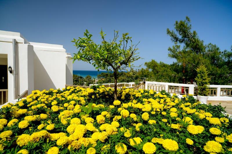 Δέντρο μεταξύ των λουλουδιών στοκ φωτογραφία με δικαίωμα ελεύθερης χρήσης