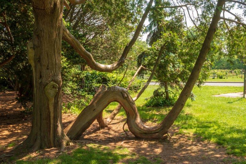 Δέντρο με έναν κυρτό κορμό στοκ εικόνες με δικαίωμα ελεύθερης χρήσης