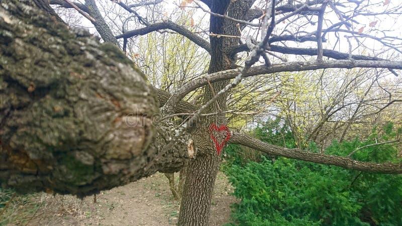 Δέντρο με τα γκράφιτι καρδιών στο Hill Gellert, Βουδαπέστη, Ουγγαρία στοκ φωτογραφία