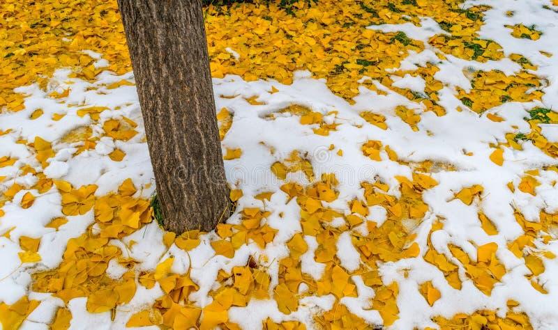 Δέντρο με τα κίτρινα φύλλα στο χιόνι στοκ φωτογραφία με δικαίωμα ελεύθερης χρήσης