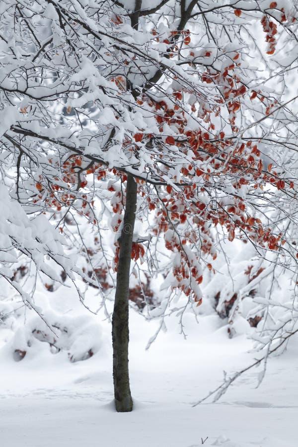Δέντρο με τα κόκκινα φύλλα το χειμώνα στοκ φωτογραφία με δικαίωμα ελεύθερης χρήσης