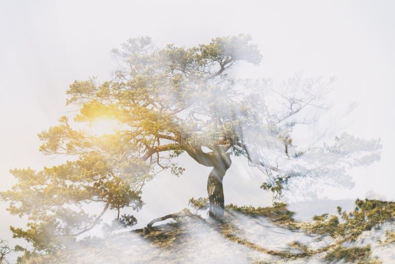 Δέντρο με την ακτινοβολία της δύναμης στοκ φωτογραφίες με δικαίωμα ελεύθερης χρήσης