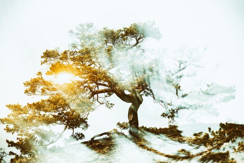 Δέντρο με την ακτινοβολία της δύναμης στοκ φωτογραφία