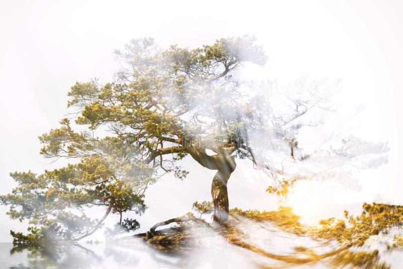 Δέντρο με την ακτινοβολία της δύναμης στοκ εικόνες
