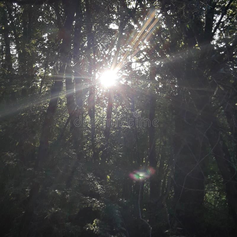 Δέντρο με τη δασική ημέρα ήλιων στοκ φωτογραφίες με δικαίωμα ελεύθερης χρήσης