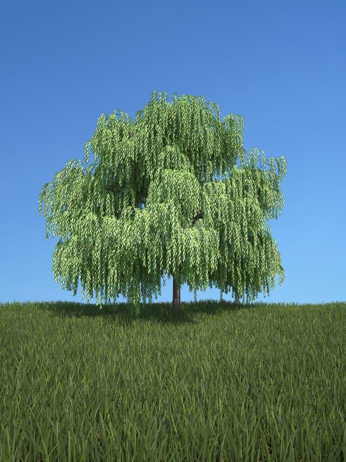 Δέντρο με τη χλόη και το μπλε ουρανό ελεύθερη απεικόνιση δικαιώματος