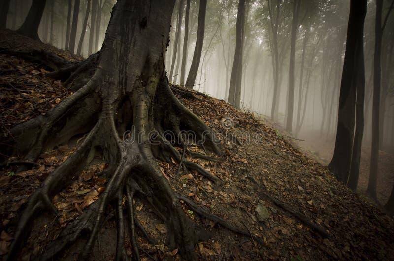 Δέντρο με τις μεγάλες ρίζες στο δασικό χώμα στοκ εικόνες με δικαίωμα ελεύθερης χρήσης
