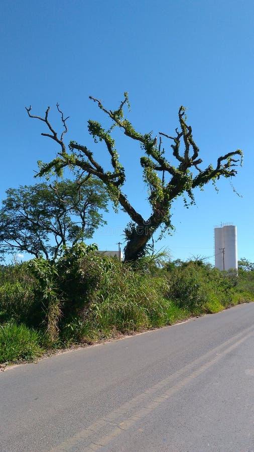 Δέντρο με τις ορχιδέες στοκ φωτογραφία με δικαίωμα ελεύθερης χρήσης