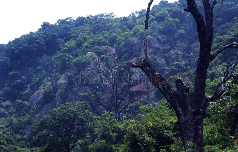 Δέντρο με το λόφο στοκ εικόνες