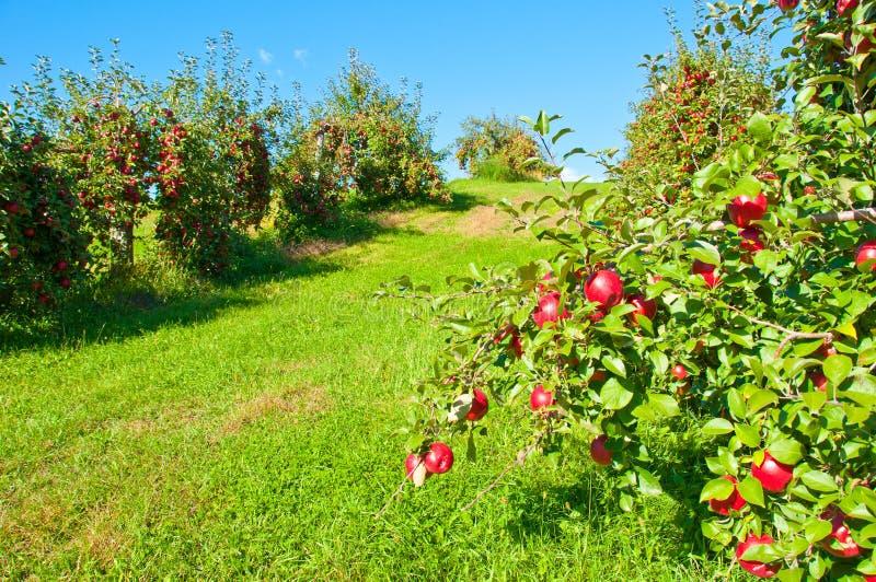δέντρο μηλιάς στοκ φωτογραφία με δικαίωμα ελεύθερης χρήσης