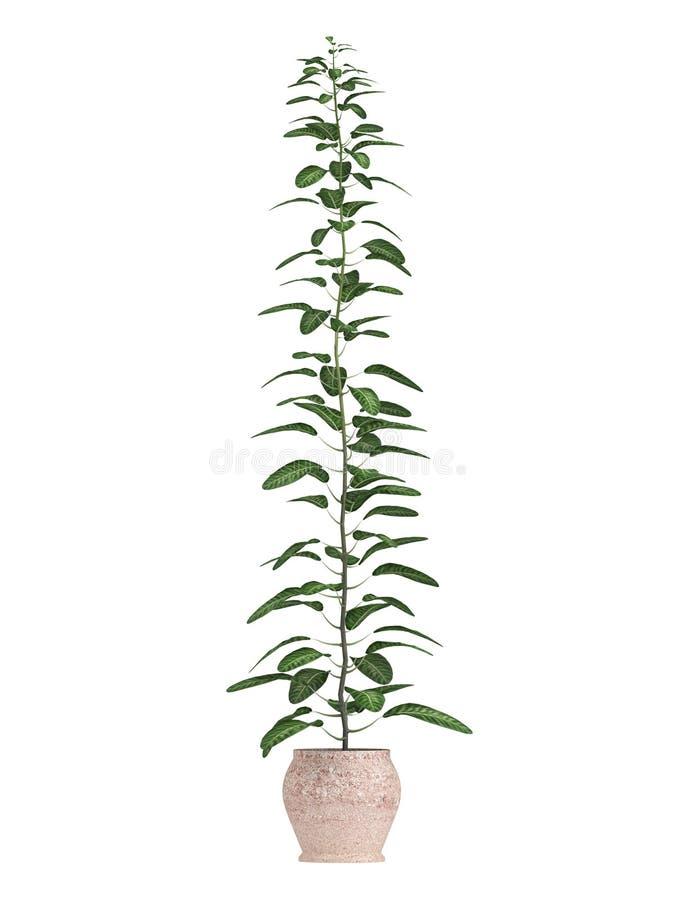 Δέντρο μπονσάι σε ένα δοχείο απεικόνιση αποθεμάτων