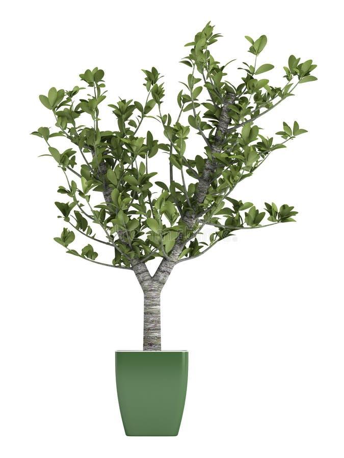 Δέντρο μπονσάι σε ένα πράσινο δοχείο διανυσματική απεικόνιση