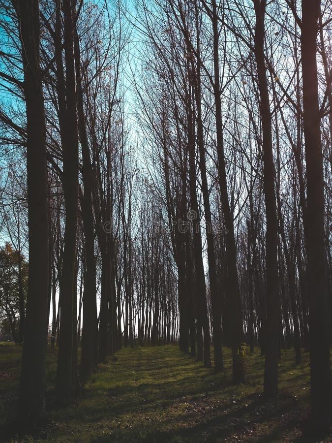Δέντρο μυστηρίου στοκ φωτογραφίες