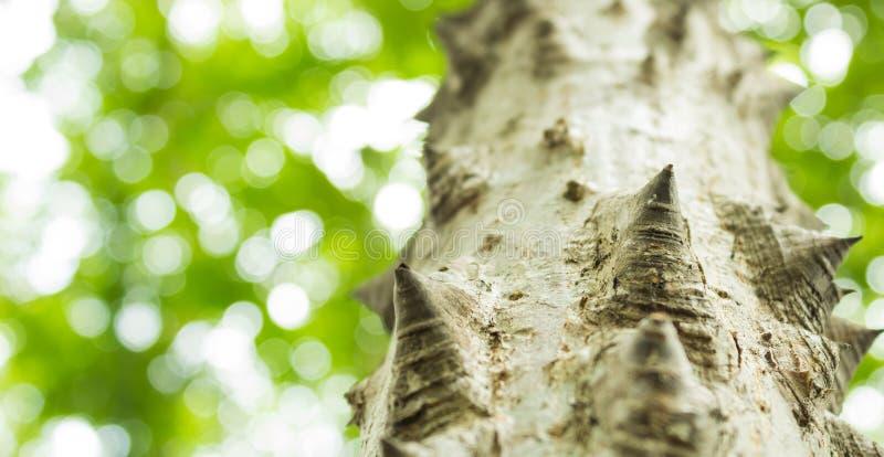 δέντρο νήματος μεταξιού στοκ φωτογραφία με δικαίωμα ελεύθερης χρήσης
