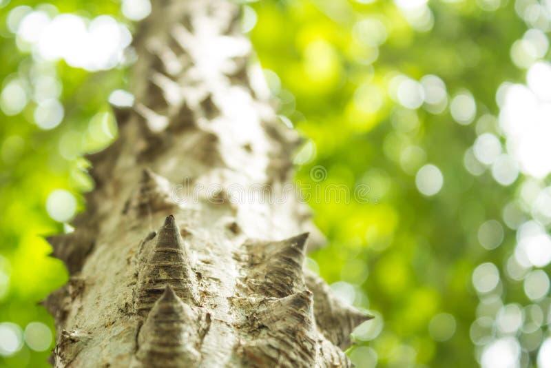 δέντρο νήματος μεταξιού στοκ φωτογραφία