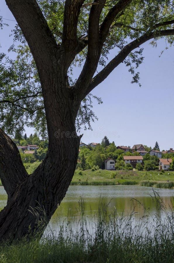 Δέντρο, ξέφωτο, κάλαμος ή βιασύνη και σπίτι άνοιξης πράσινο παλαιό σε μια λίμνη ομορφιάς στην κατοικημένη περιοχή Marchaevo, Sofi στοκ φωτογραφίες