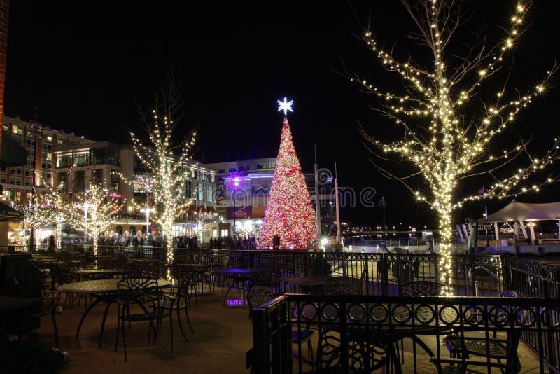Δέντρο Ουάσιγκτον DC λιμενικών διακοπών Nat'l τη νύχτα στοκ φωτογραφία με δικαίωμα ελεύθερης χρήσης