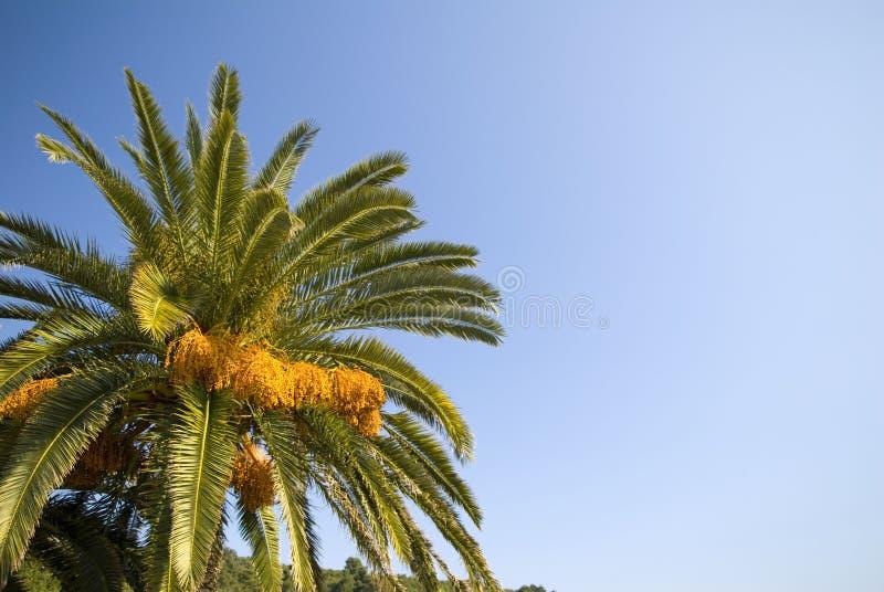 δέντρο ουρανού φοινικών στοκ εικόνα