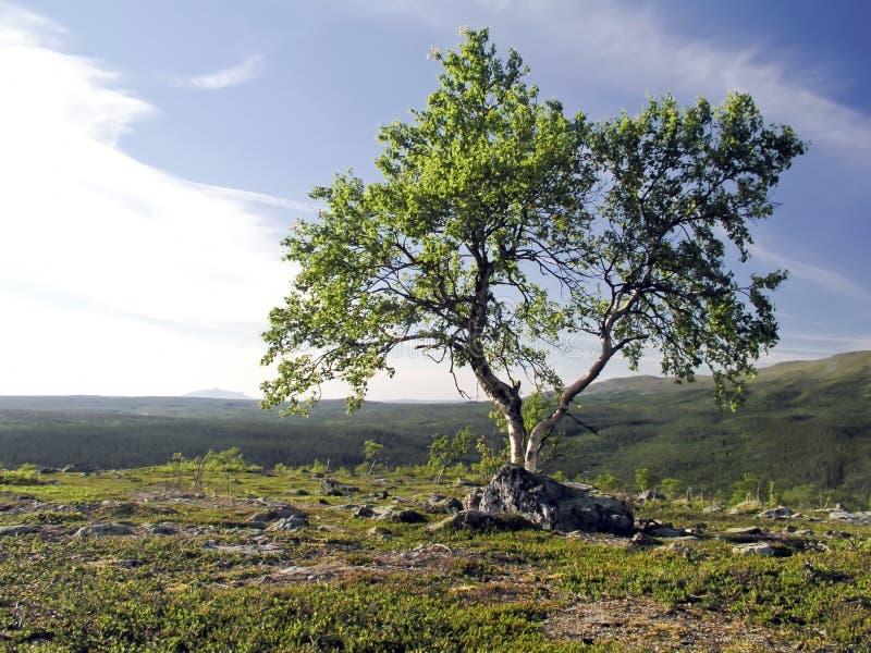 δέντρο ουρανού στοκ φωτογραφίες
