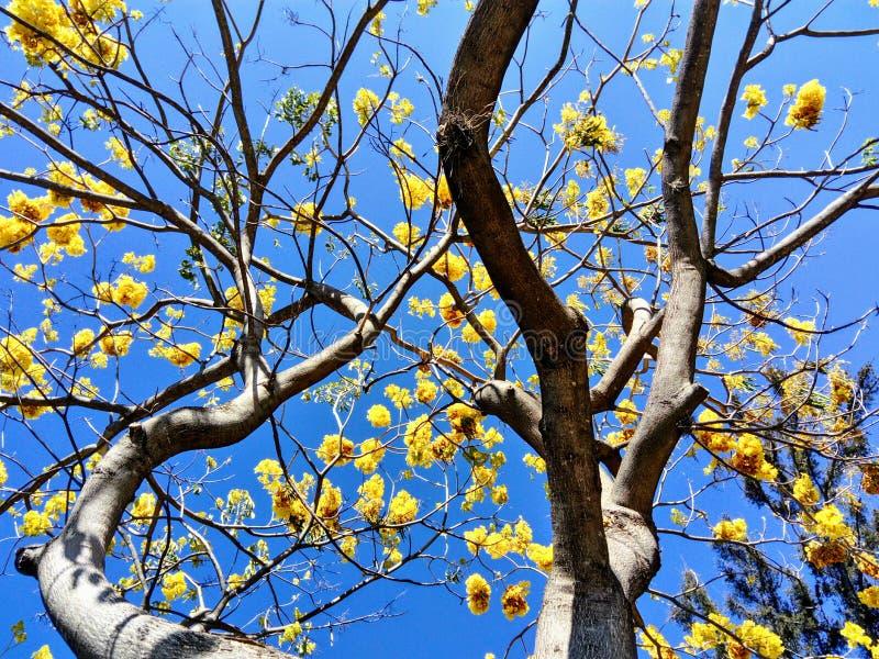 Δέντρο, λουλούδια & μπλε ουρανός στοκ εικόνα