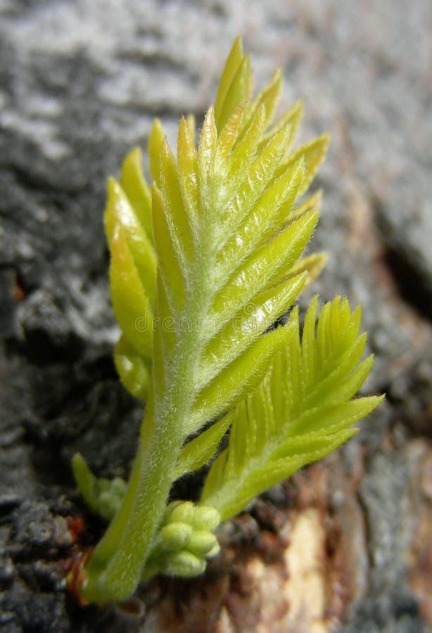 δέντρο οφθαλμών στοκ εικόνα με δικαίωμα ελεύθερης χρήσης