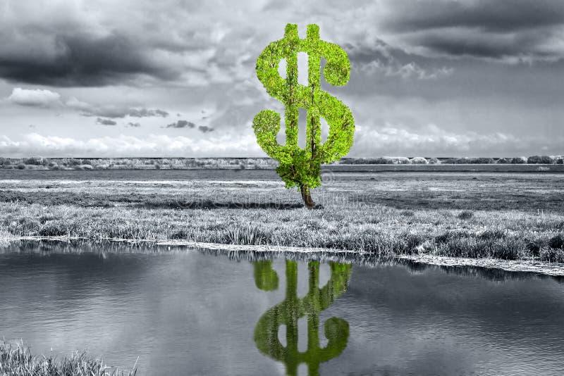 Δέντρο δολαρίων στοκ εικόνα με δικαίωμα ελεύθερης χρήσης