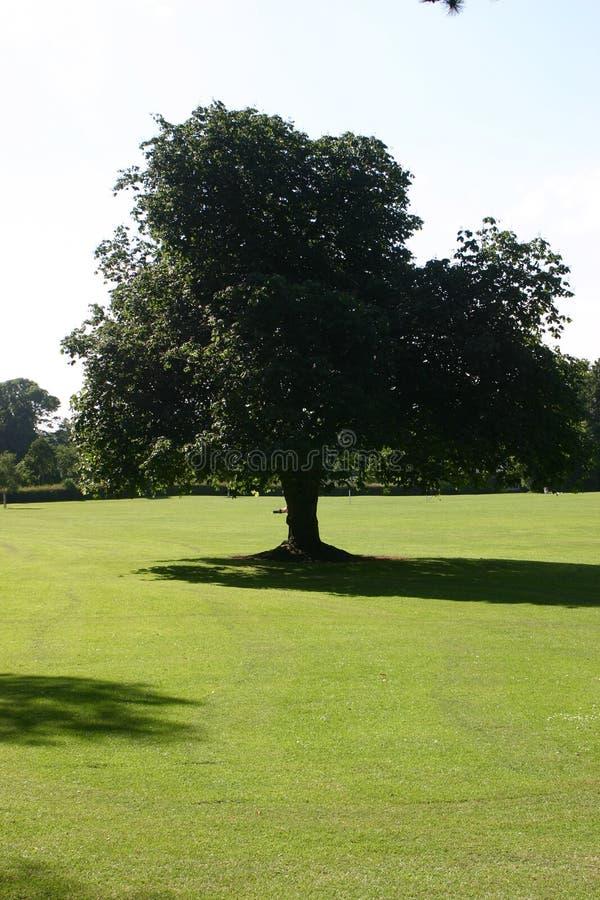 δέντρο πάρκων στοκ φωτογραφίες με δικαίωμα ελεύθερης χρήσης