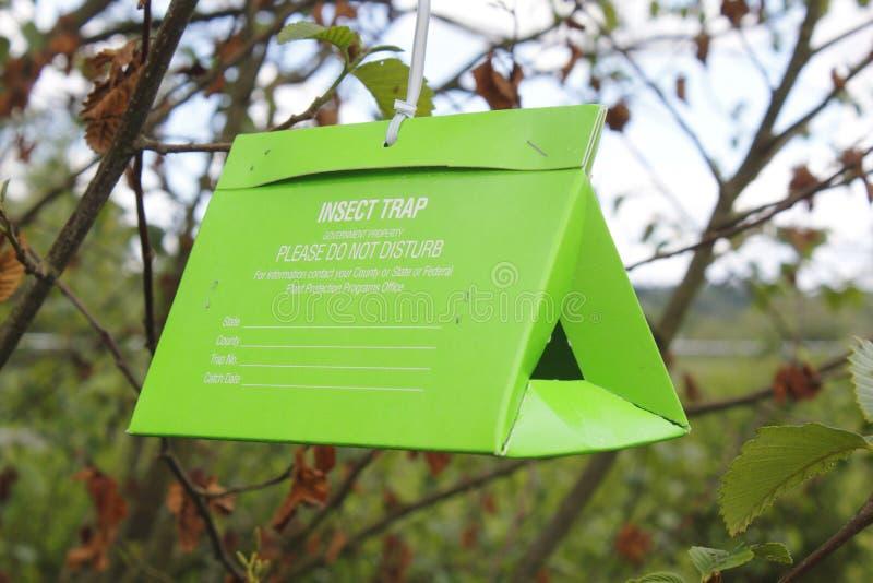 δέντρο παγίδων εντόμων στοκ φωτογραφίες