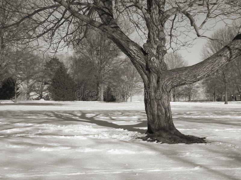 δέντρο πεδίων Bw Στοκ Εικόνες