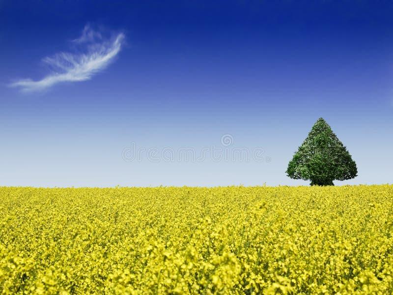 δέντρο πεδίων canola στοκ φωτογραφίες