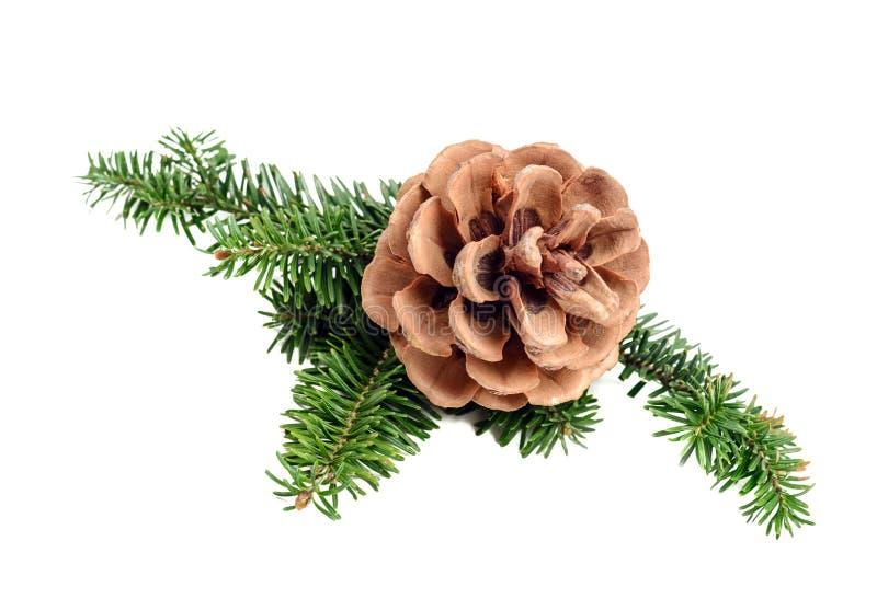 δέντρο πεύκων κώνων κλάδων στοκ εικόνα