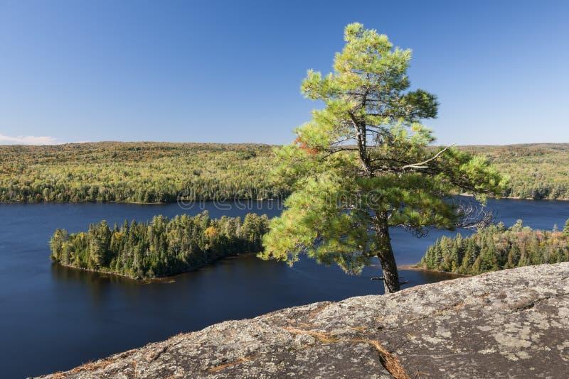 Δέντρο πεύκων με μια άποψη στοκ φωτογραφία με δικαίωμα ελεύθερης χρήσης