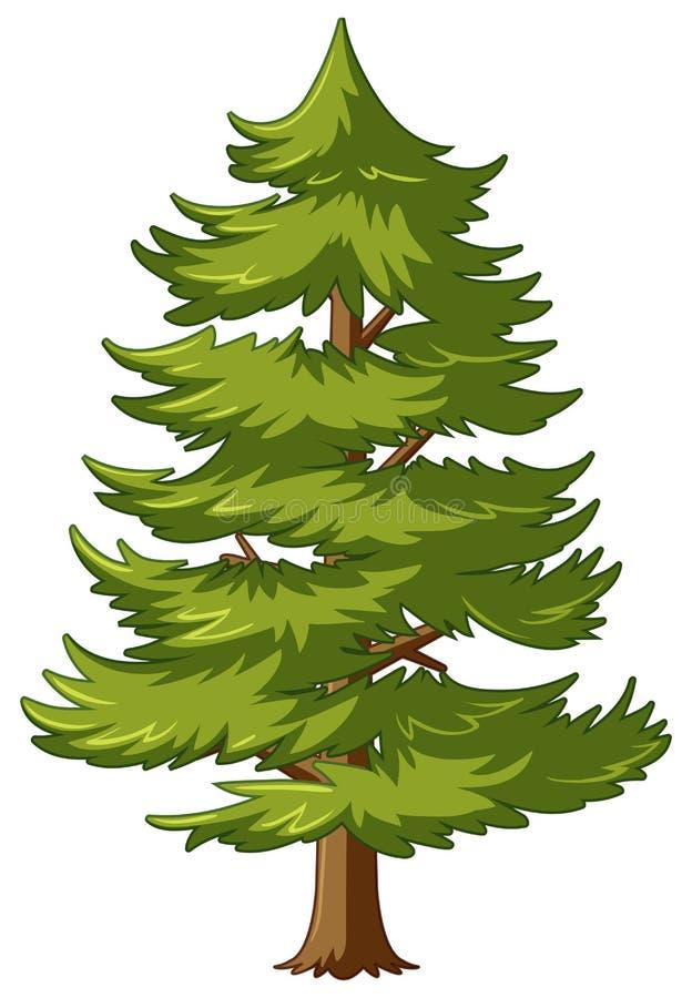 Δέντρο πεύκων με τα πράσινα φύλλα ελεύθερη απεικόνιση δικαιώματος