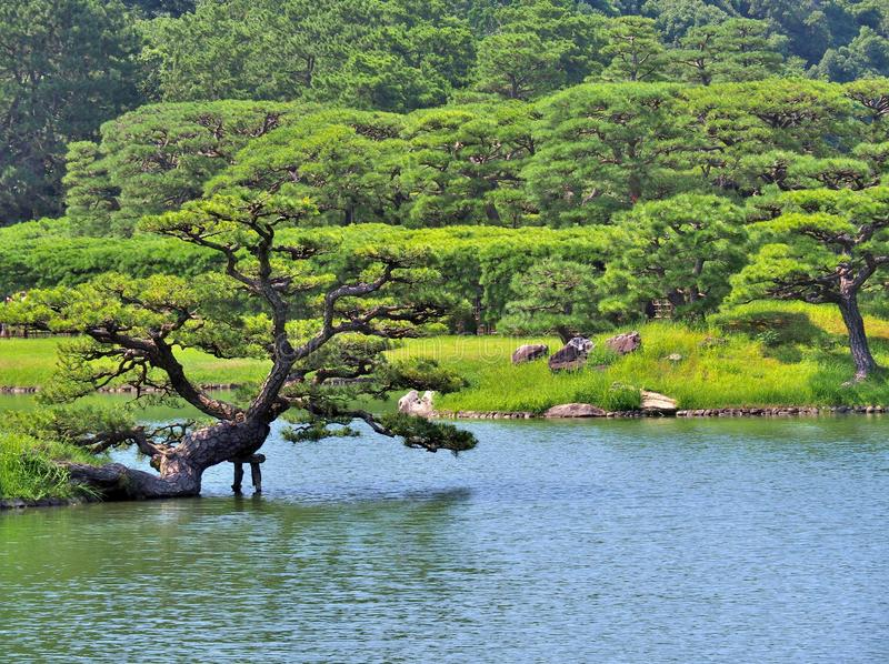 Δέντρο πεύκων με τη λίμνη στον κήπο Ritsurin στοκ φωτογραφίες με δικαίωμα ελεύθερης χρήσης