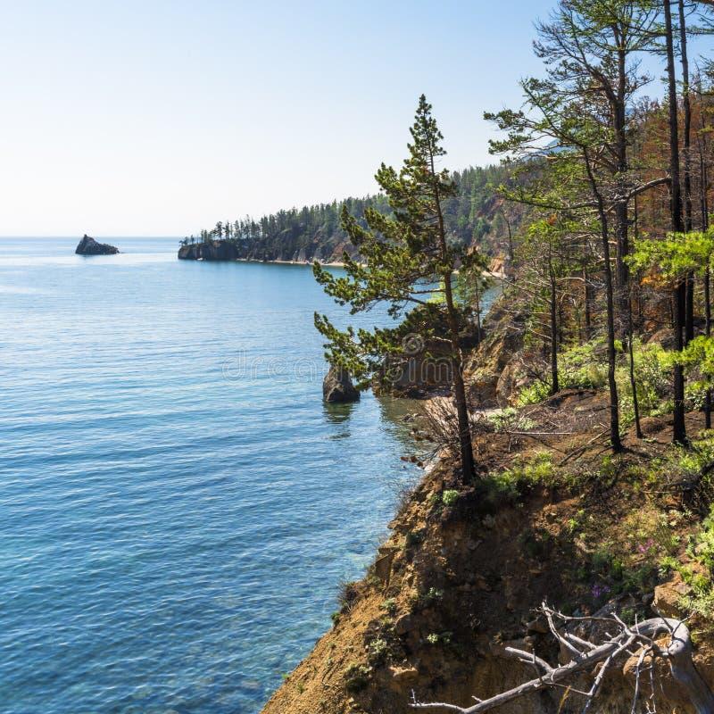 Δέντρο πεύκων στην άκρη του απότομου βράχου στοκ φωτογραφία με δικαίωμα ελεύθερης χρήσης