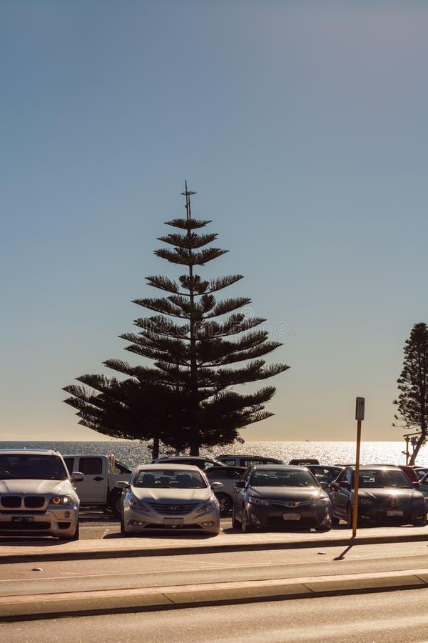 Δέντρο πεύκων στην περιοχή χώρων στάθμευσης παραλιών Cottlesloe στοκ εικόνες