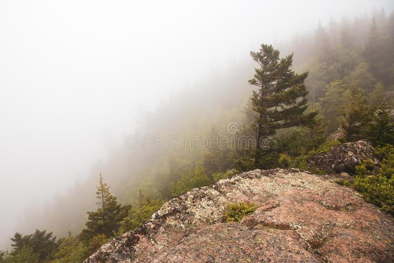Δέντρο πεύκων στο βουνό στο εθνικό πάρκο Acadia, Μαίην ΗΠΑ στοκ εικόνες